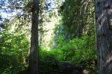 8 - Wanderweg Wald