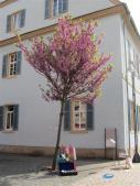 7 - Speyer, FuZo