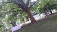 ... um den Baum herum angeordnet