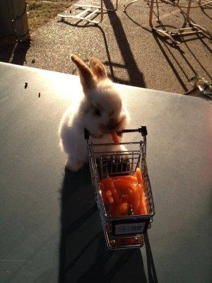 fav bunny 03.15