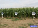 ich weiß jetzt, wo Amaretto angebaut wird! ;o)