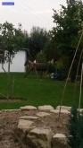 Ein Pferd im Garten?
