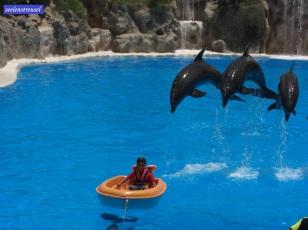 2008 Teneriffa Loro Parque