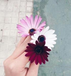 fav flowers 08.16