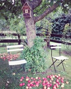 fav garden II 08.16