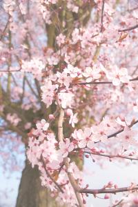 fav-spring-pic-02-17